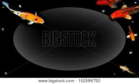 Koi fish zoom in and crop to fish tail of swimming group in pond house photo longer have center space for your word.