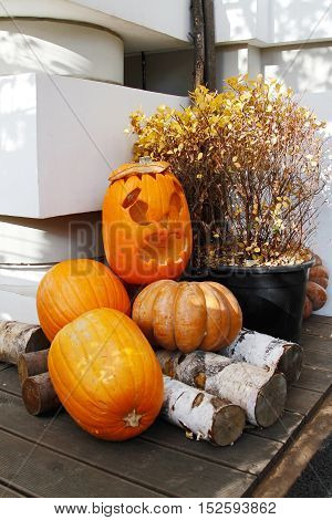 Halloween still life with pumpkins firewood and plant