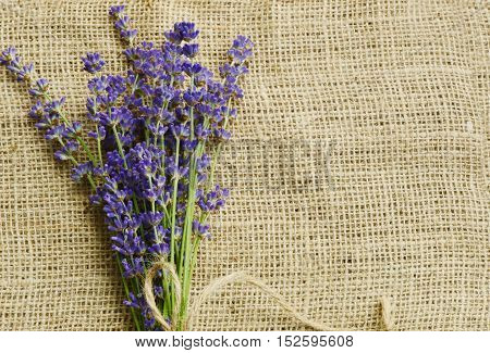 close up from lavender on sackcloth background
