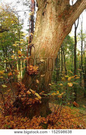 tree trunk illuminated by sunlight in the autumn