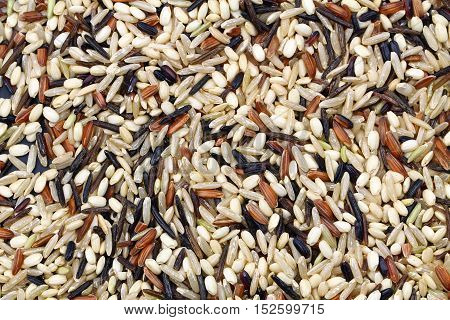 A background of wild rice filling the frame