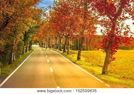 Asphalt road in Fall Season with Maple trees