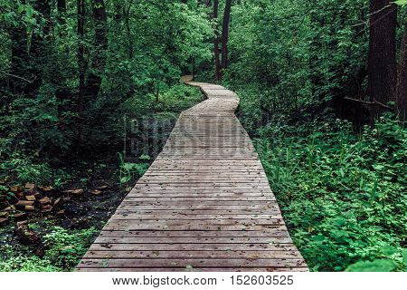 Wooden pathway among deciduous forest. Nature, way concept