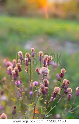 Autumn flowers in afternoon warm sunlight photography