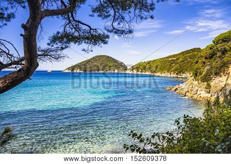 Elba island sea Portoferraio Viticcio beach coast and mediterranean pine trees Tuscany Italy Europe.