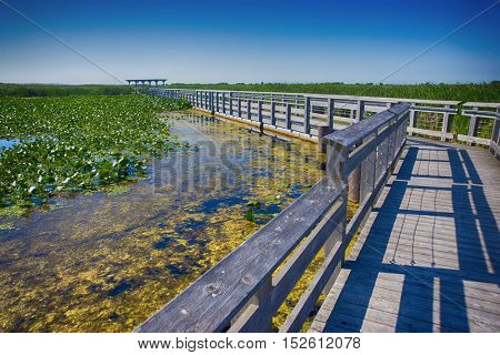 Point Pelee national park boardwalk in the summer, Ontario, Canada