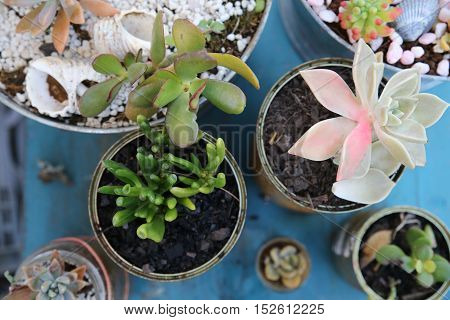 succulents in used jars and tins Eco and reuse concept