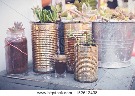 Succulents In Rustic Tins, Eco And Reuse Concept