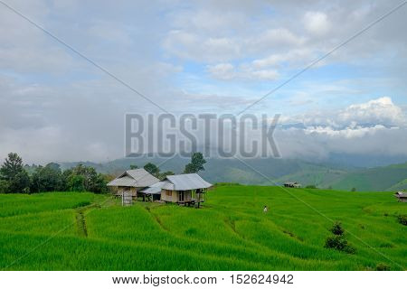 Pa Pong Piang Rice Terraces in  Thailand