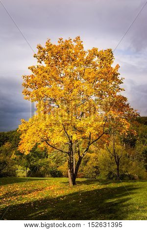 Autumn Fall Season Changing Leaves Contrast Single Tree Alone Forest Independent Orange Yellow Red L