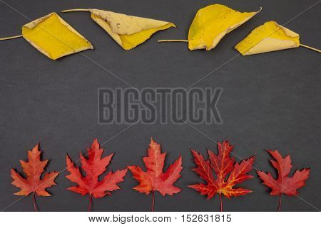 Autumn colorful fallen leaves in rows on dark grey background with copy space