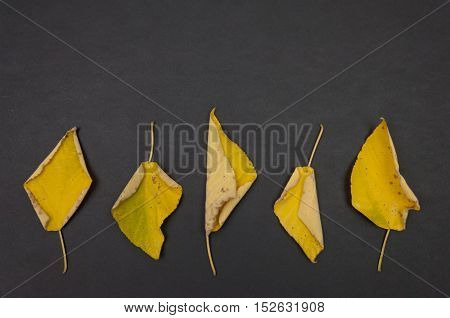 Pattern of autumn colorful fallen leaves on dark grey background with copy space