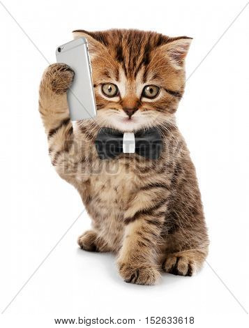 Small funny kitten with mobile smart phone and tie isolated on white