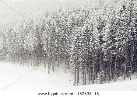 Winter Forest Snowfall