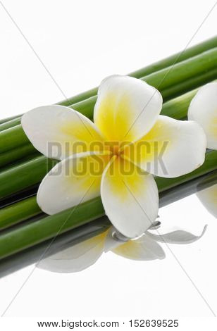 Set of frangipani with bamboo grove