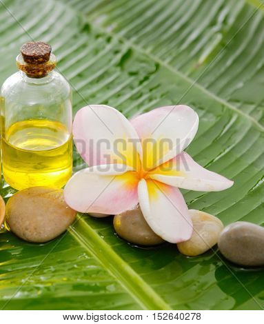 Tropical Spa on banana leaf