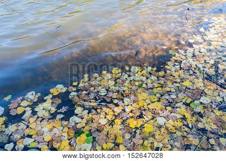 Fallen leaves in water in sunny autumn day