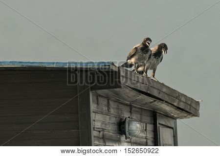 Two crows on a building roof on a sunny day