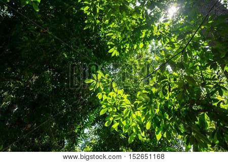 Backlit forest tree branches on a sunny day in a tropical rainforest