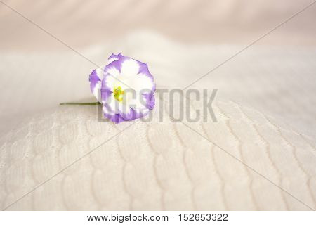 composition - white with a purple flower on a soft ice cream  background
