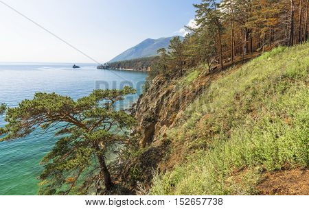 Sandy slope on the coast of lake Baikal overgrown green grass and sparse pine trees.