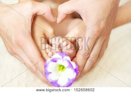 baby feet in mom's and dad's hands with a flower and a blurred background