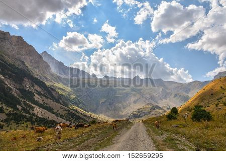 Gravel road through a valley with grazing cows with dramatic clouds as a backdrop