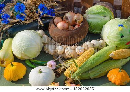 Autumn Still Life. Harvest of variety of vegetables