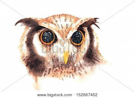 Watercolor Illustration Of Wild Brown Owl With Beautiful Big Eyes