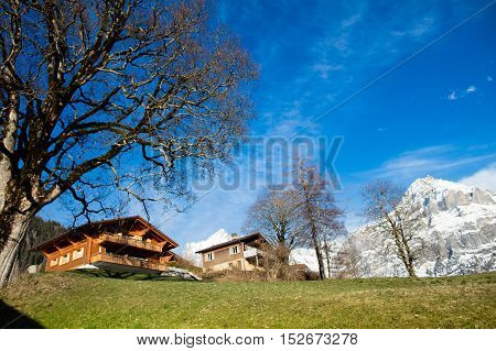 Scenic landscape of valley and mountains in Switzerland on sunny spring day. Snow covered Alps mountain peaks and blooming meadow in Swiss Alps.