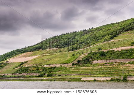 The vineyards along the Rhine Valley in cloudy weather Germany