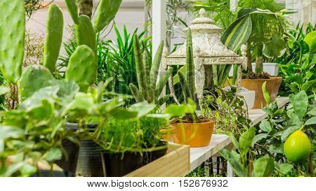 Relaxing area with garden object decoration on shelf in cozy garden.