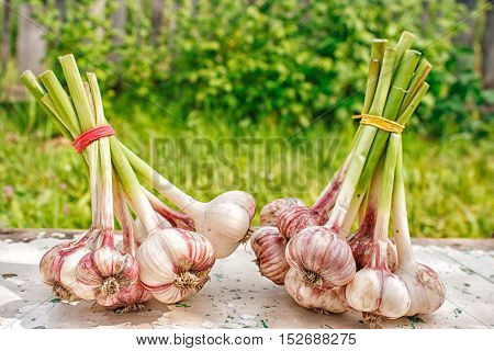 two bundles of garlic lying on the wooden table outdoor on summer day closeup