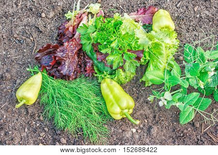 pepper green and red lettuce peas parsley dill lying on the ground closeup