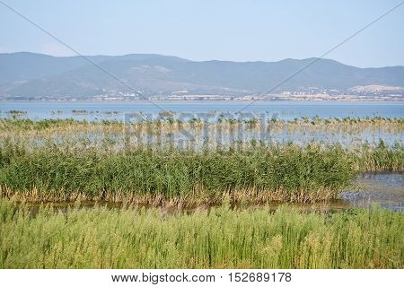 Small lake and dense reed in a beautiful summer day