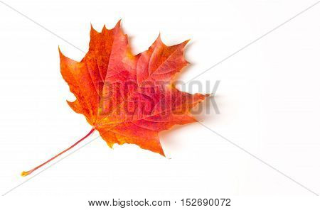 Texture, Background. Maple Leaves Yellow Shades Of Red And Gold. The Leaf Of The Maple, Used As An E