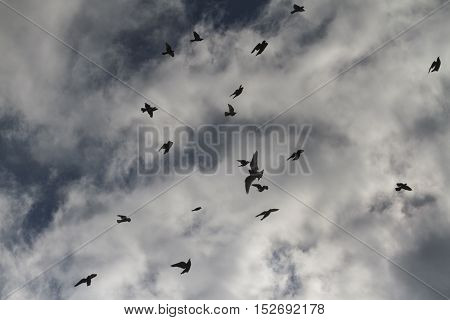 silhouettes of pigeons in stormy sky, sports bird , wings uncovered
