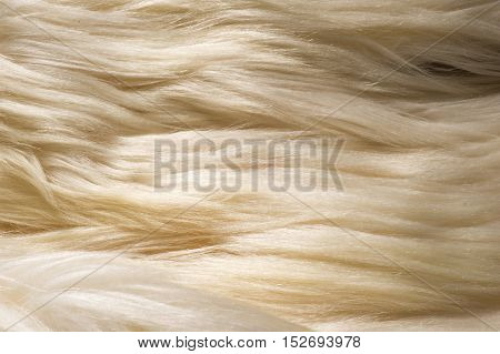 Texture, Background. Fur White Yak. A Large Domesticated Wild Ox With Shaggy Hair, Humped Shoulders,