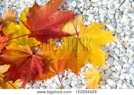Texture, Pattern, Background. Maple Leaves On Marble Chips, Decorative Beautiful