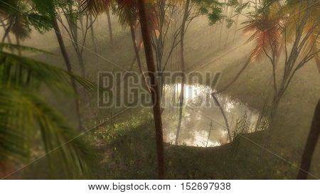 High Angle View Of Puddle In Foggy Tropical Forest Lit By Beam Of Light.