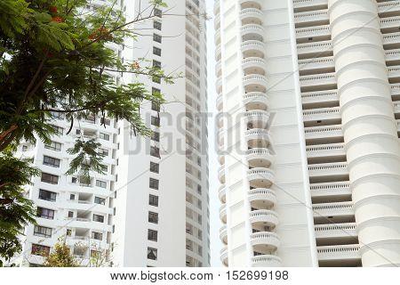 Green tree branch against giant white hotel buildings background. Beautiful luxury condominium skyscraper
