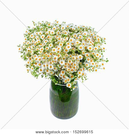 Bouquet of wild daisies in a glass vase. Isolated over white background. White flowers