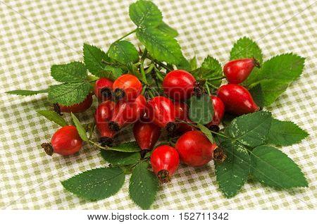 Wild Rose Bush, Checkered Napkin On The Table