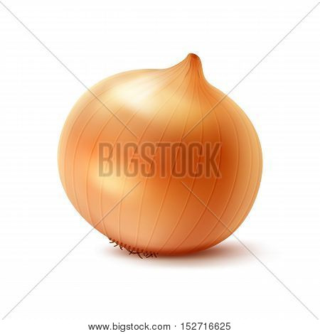 Vector Fresh Whole Yellow Onion Bulb Close up Isolated on White Background