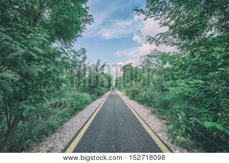 bicycle and pedestrian road in summer bush