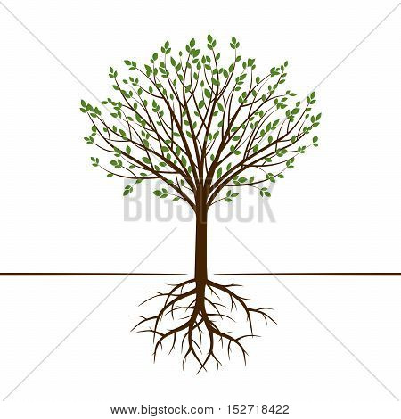 Color Tree and Roots. Vector Illustration and graphic Element.