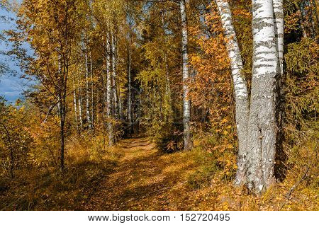 Deciduous in autumn season in the month of October