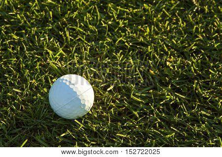 Golf Ball in Fairway Grass