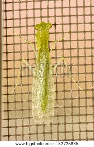 The grasshopper green on the steel mesh.
