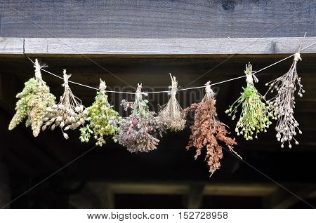 Dried herbs bound in bundles and hung on the rope. Close up dark background.